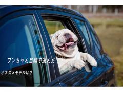 愛犬とのドライブが楽しくなる1台