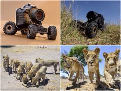 野生のライオンが群れで襲撃! ラジコンカメラカーが捉えた迫力写真!