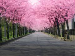 春からのカーライフを強力サポート【新生活を楽しむための目的別買い替え攻略法】