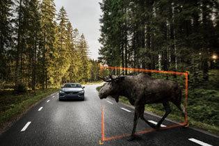 大型動物検知機能