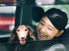 犬が車酔いする原因とは?症状や対策、乗せ方や注意点についてわかりやすく解説